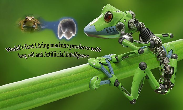 World's First 'Living Machine' Created Using Frog Cells and Artificial Intelligence Education Post